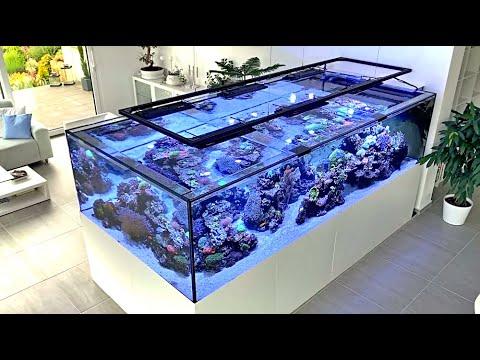 Das 3.300 Liter Meerwasser Aquarium von Martin Kunzelnick - ein Meerwasser Hausbesuch