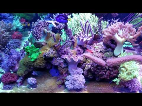 MikeC Soft Coral Reef Tank