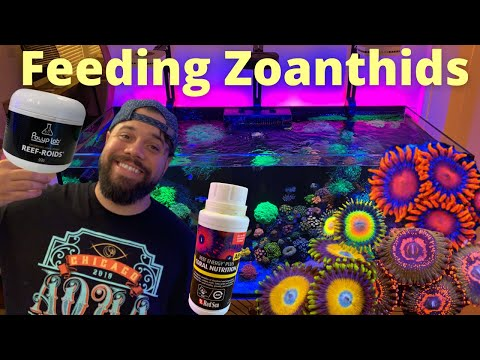 Feeding Zoanthids