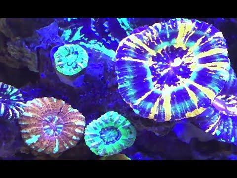 Hausbesuche: Der Deepwater Reef Tank,der Gebr. Niessen, Niederlande