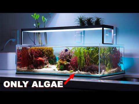 "REEF TANK TOURS - ""macroalgae aquarium"" - PRIVATE SHOWROOM ( 3 x Nano saltwater tanks)"