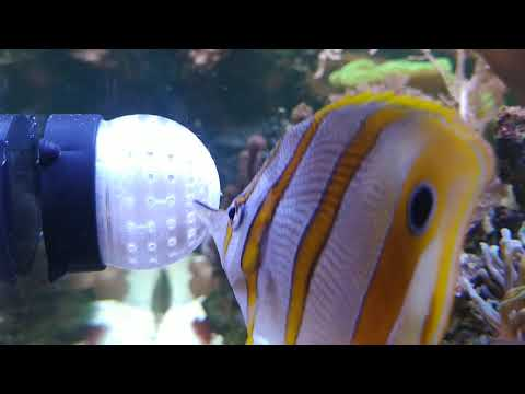 Binnenmeer.de Futter-Ei aus dem 3D-Drucker (1/3)