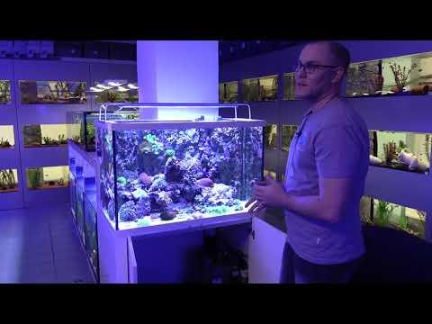Hausbesuche: Meerwasser bei Fish and More im Siegerland