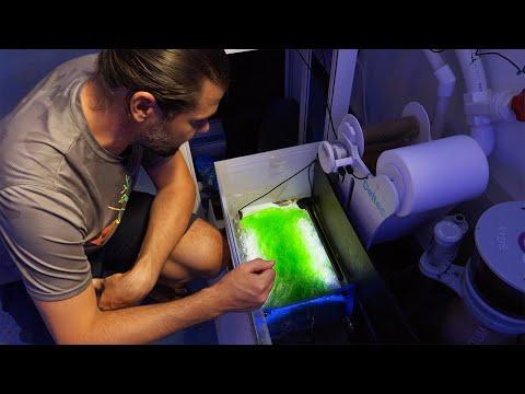 A Hypnotic Spinning Algae Scrubber