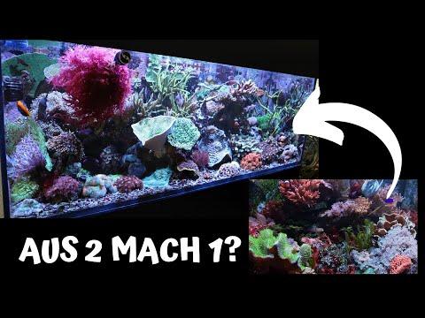 Reef Update: Steinkorallen vs. Weichkorallenbecken - wie geht's weiter?