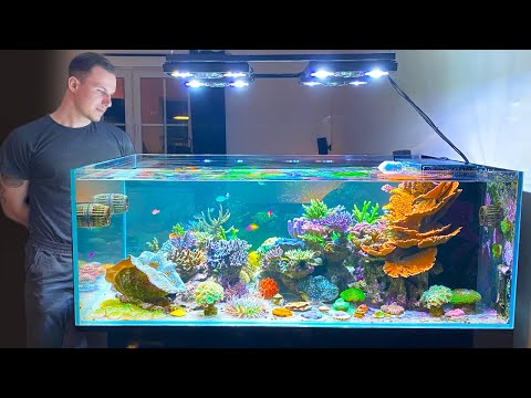 "GERMAN REEF TANKS - ""Designer Shallow Coral Reef"" - 800 liter / 215 gallon aquarium"