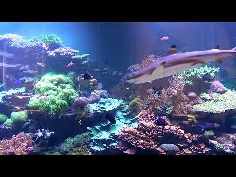 240.000 Liter Korallenriff-Aquarium mit Haien im Vivarium Karlsruhe - ein Meerwasser Hausbesuch 2/2