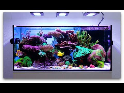 Schwings Reef Tank 4k | 2020 | Full Tank & coral macros | powered by EcoTechMarine